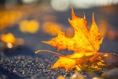 Um detalhe de folhas coloridas outonais na intensidade da luz solar imagens de stock royalty free