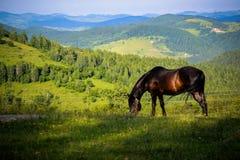 Um detalhe muito agradável e interessante Um cavalo bonito aprecia e livre alimentar na riqueza natural fotografia de stock royalty free