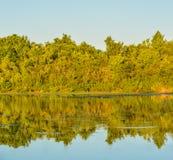 Um dia bonito para ver a reflexão das árvores no lago em John S Taylor Park no Largo, Florida Fotografia de Stock