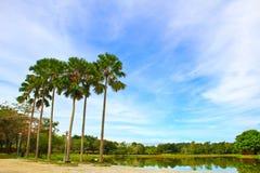 Um dia brilhante no parque Foto de Stock