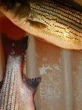 Um dia da pesca imagens de stock royalty free