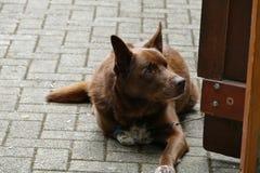 Um dia de cão Foto de Stock Royalty Free