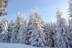 Um dia de inverno gelado Imagem de Stock Royalty Free