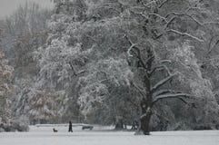 Um dia de inverno no parque Fotos de Stock Royalty Free