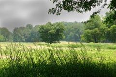 Um dia de verão em um parque Fotografia de Stock Royalty Free