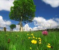 Um dia de verão ensolarado Imagens de Stock Royalty Free