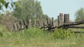 Um dia de verão quente Cerca de madeira velha vídeos de arquivo
