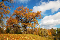 Um dia do sol do outono. Imagem de Stock Royalty Free