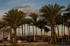Um dia em Florida pelas palmeiras Imagens de Stock