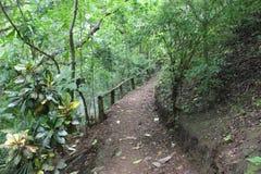 Um dia em uma exploração agrícola tropical foto de stock royalty free