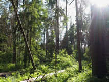 Um dia ensolarado na floresta fotos de stock