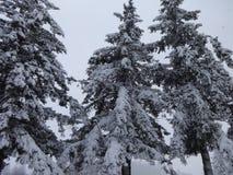 Um dia nevado Foto de Stock Royalty Free