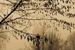 Um dia nevoento imagem de stock