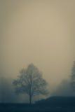 Um dia nevoento fotografia de stock