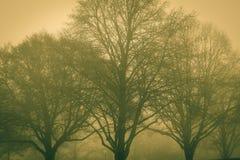 Um dia nevoento imagem de stock royalty free