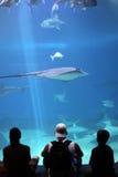 Um dia no aquário Fotografia de Stock