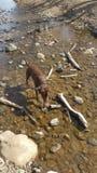 Um dia no lago Foto de Stock