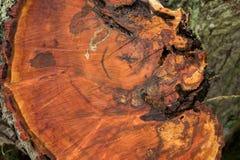Um disco da árvore com os anéis anuais, úteis como uma textura imagens de stock