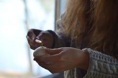 Um dispositivo para pintar ovos da p?scoa encerados Ovos da p?scoa de pintura com cera quente foto de stock
