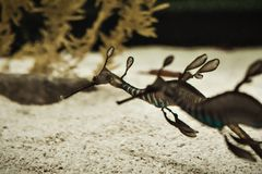Um dragão bonito do mar imagem de stock royalty free