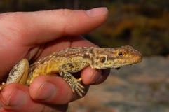Um dragão na mão Foto de Stock