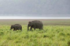 Um elefante com sua vitela Fotografia de Stock Royalty Free
