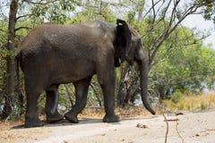 Um elefante em África Fotos de Stock