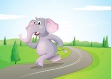 Um elefante que corre na estrada Fotografia de Stock Royalty Free