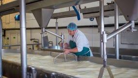 Um empregado da fábrica de queijo que faz o coalho Foto de Stock Royalty Free