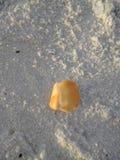 Um escudo na praia Fotografia de Stock Royalty Free