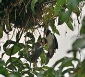 Um esforço inoperante do pintainho e de salvamento pelo pássaro da mamã fotos de stock