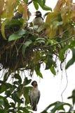 Um esforço inoperante do pintainho e de salvamento pelo pássaro da mamã foto de stock