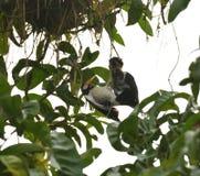 Um esforço inoperante do pintainho e de salvamento pelo pássaro da mamã imagens de stock royalty free