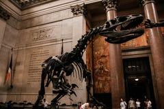 Um esqueleto decorativo de um dinossauro imagens de stock