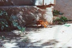 Um esquilo corre através da estrada imagens de stock