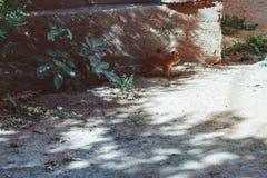 Um esquilo corre através da estrada fotos de stock