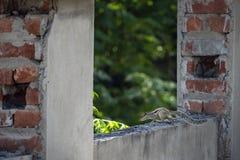 Um esquilo em minha casa imagem de stock