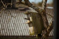 Um estorninho preto bonito com uma casa do pássaro em uma árvore de maçã Fotografia de Stock Royalty Free