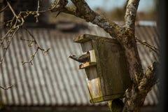 Um estorninho preto bonito com uma casa do pássaro em uma árvore de maçã Imagens de Stock