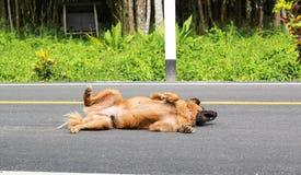 Um exercício marrom do cão na rua imagens de stock