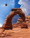 Um falcão no arco delicado, parque nacional dos arcos Foto de Stock Royalty Free