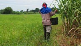 Um fazendeiro anda com uma cubeta do adubo video estoque