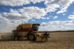 Um fazendeiro colhe um prado do broadacre do trigo Imagens de Stock