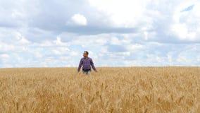 Um fazendeiro do homem-um em um campo de trigo, inspecionando o negócio agrário da colheita, agricultura Paisagem bonita com nuve video estoque