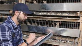 Um fazendeiro empreendedor usa uma tabuleta digital em uma exploração agrícola das codorniz vídeos de arquivo