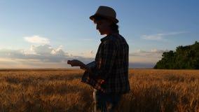 Um fazendeiro fêmea em uma camisa quadriculado anda os campos de trigo com uma tabuleta e verifica a qualidade da colheita fotos de stock royalty free