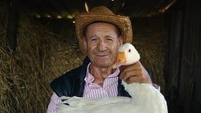 Um fazendeiro idoso em um chapéu de palha está guardando um ganso branco vivo Retrato de um homem com um ganso branco em um fundo video estoque