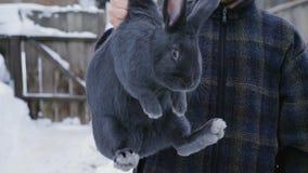 Um fazendeiro inspeciona um coelho azul grande que guarda seu murcha filme