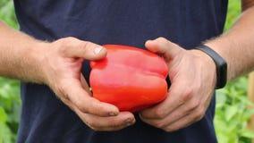 Um fazendeiro macho está mostrando uma linda pimenta vermelha video estoque