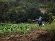 Um fazendeiro tailandês Tends do cigarro seu campo imagens de stock royalty free
